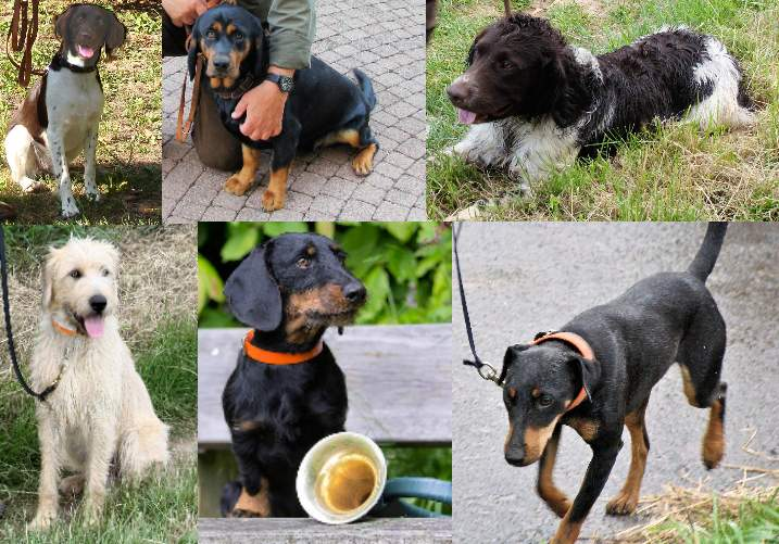 Hunde 2013
